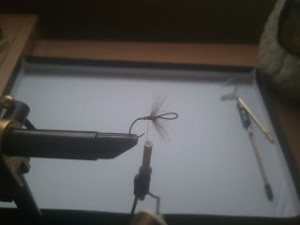Tying in the hackle!